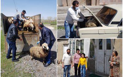 De schapen grazen dankbij collecte oecumenische viering